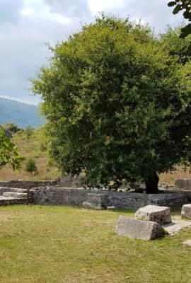 Dodona sacred oak tree tour image